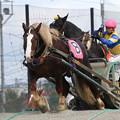 Photos: ミヤビコール レース(17/09/24・1R)