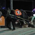 写真: キタノオーラ レース(17/11/25・11R)