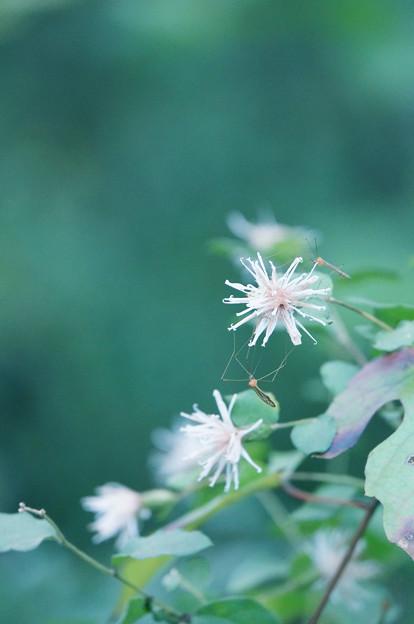 山野に咲く花、集う虫