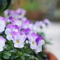 微笑みの花
