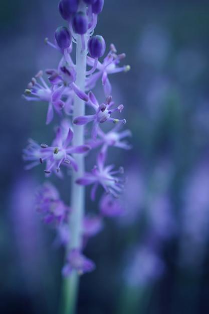 うつろう花の色