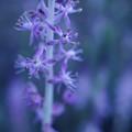 写真: うつろう花の色