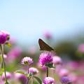 写真: 花の訪い