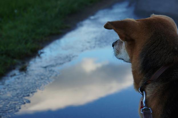 水たまりの空と犬