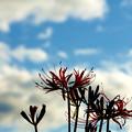 風と雲と空と華
