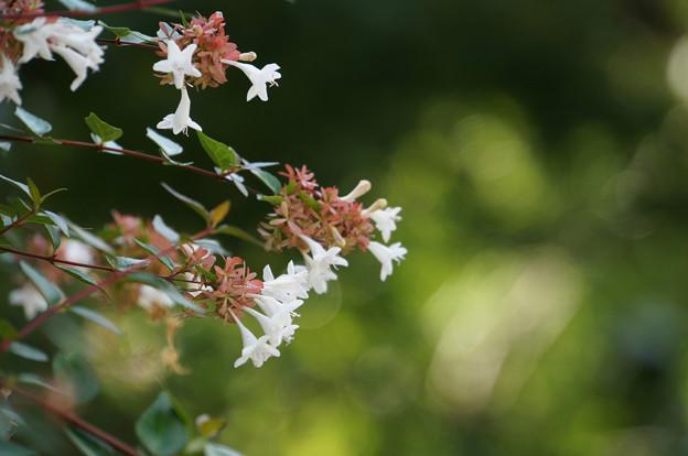 ささやかな花