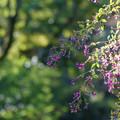 初秋を彩る