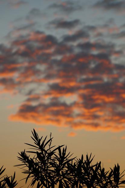 夕映えの雲