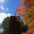 Photos: 青空に紅葉
