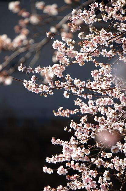 春はまだ遠く