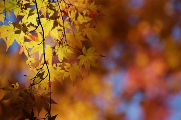 蕩けるような秋の色