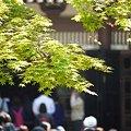 写真: 連休の鎌倉