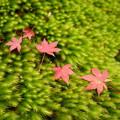写真: 苔と落葉