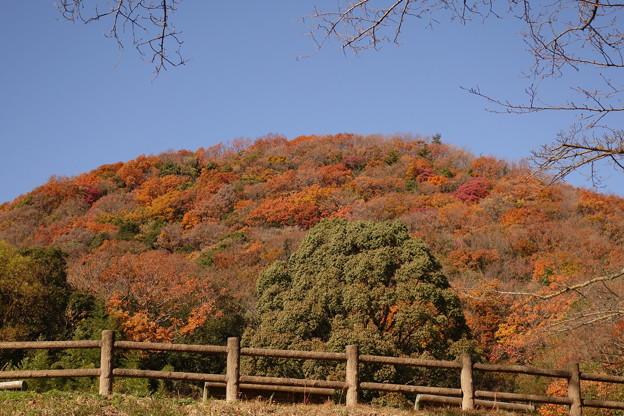 写真: 甲山百景