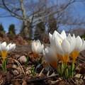 写真: 春の便り♪♪
