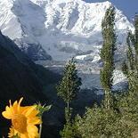 coxpakistan
