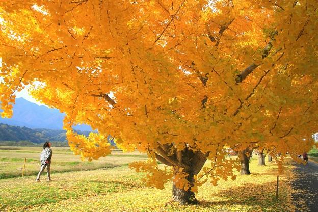 秋色の並木