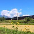 写真: なごみ(和)と八ヶ岳