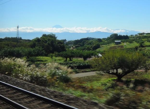桃畑と富士山