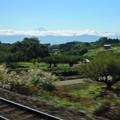 写真: 桃畑と富士山