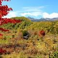 写真: 秋の乗鞍高原