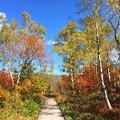 写真: 木道を歩く