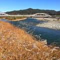 Photos: 晩秋の天竜川