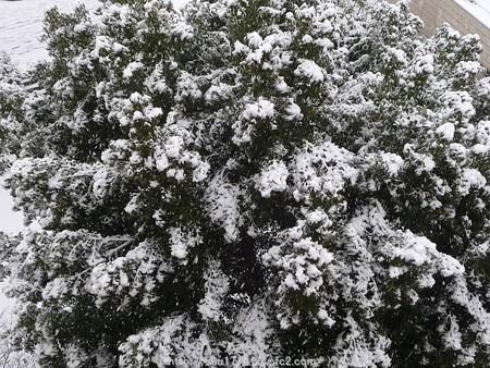 150130-雪 (1)