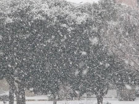150130-雪 (8)