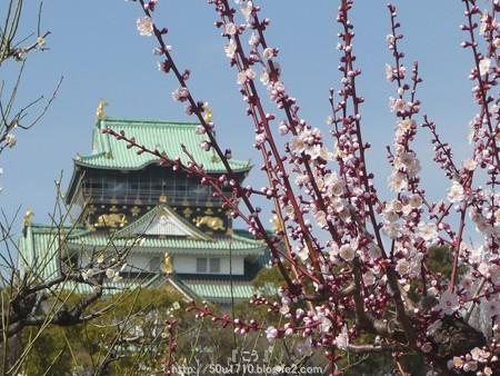 140308-大阪城梅林 (49)