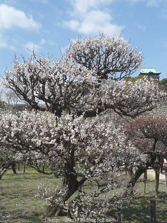 140308-大阪城梅林 (81)