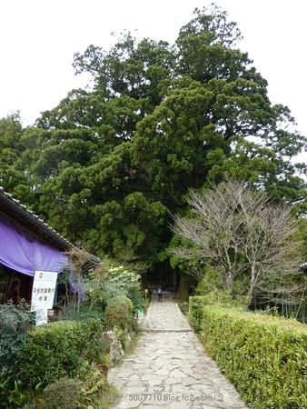 160324-熊野古道 大門坂 (26)