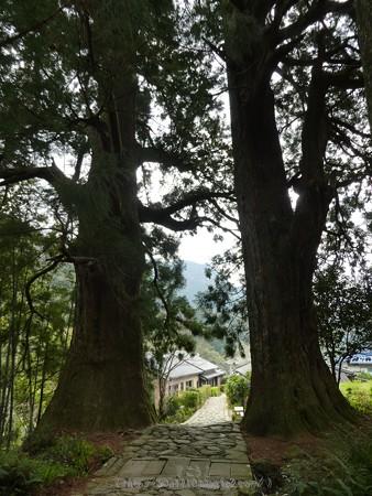 160324-熊野古道 大門坂 (35)