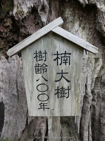 160324-熊野古道 大門坂 (45)