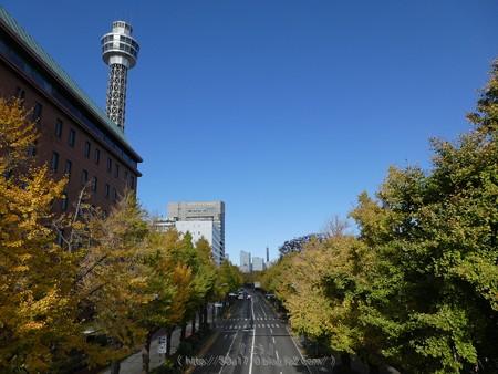 171112-山下公園通り (8)