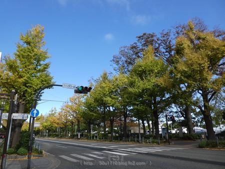 171112-山下公園通り (19)