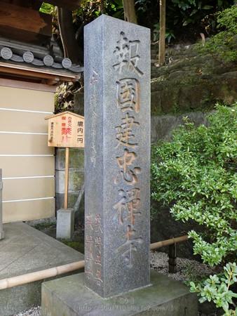 171113-報国寺 (3)