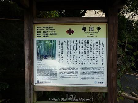 171113-報国寺 (4)