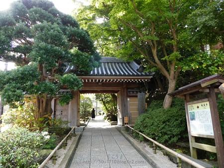 171113-報国寺 (5)