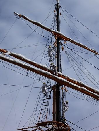 171112-日本丸 総帆展帆 (17)