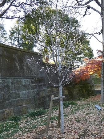 171207-皇居 (31)
