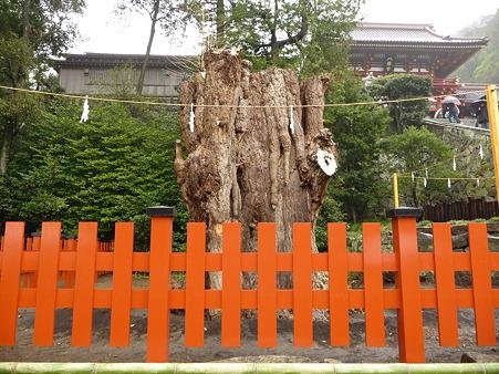 100405-八幡さま (9)