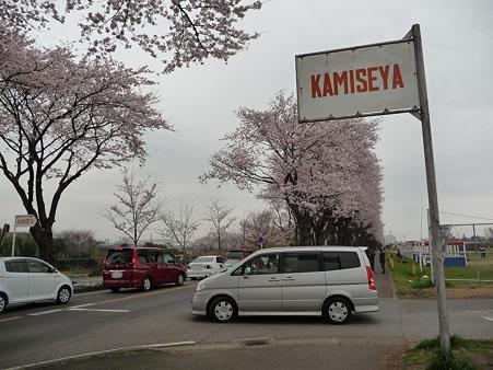 100404-海軍道路の桜 (30)