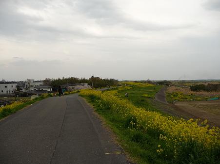 100411-熊谷桜堤 (48)