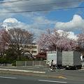 Photos: 盛岡の春