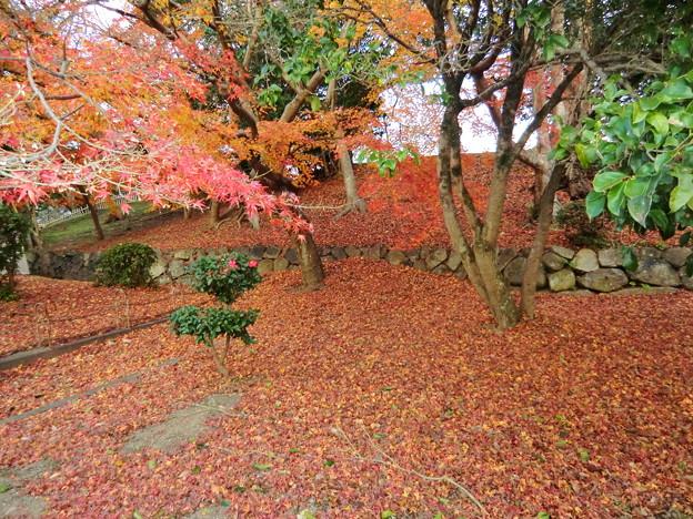 彦根城の散紅葉とひこにゃん (53)