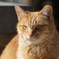 Photos: のら猫1