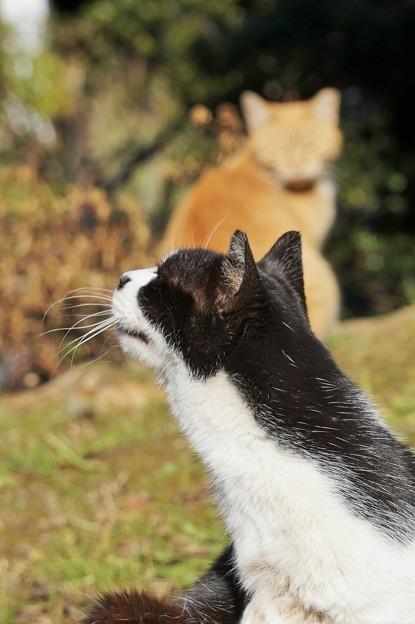 のら猫たち