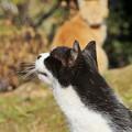 Photos: のら猫たち