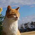 花と青空と猫@城ケ島